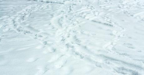 宿泊スキーキャンプ・日帰りスキー教室 受付状況