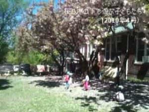 桜の木の下で遊ぶ子どもたち